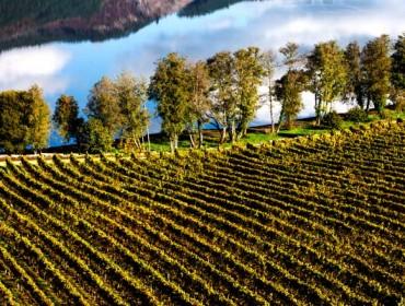 Los siete ejes de la Estrategia gallega para la dinamización de las comarcas vitivinícolas