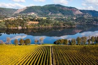 El 60 por ciento de las explotaciones vitivinícolas del Ribeiro y Rías Baixas operan de manera ecoeficiente