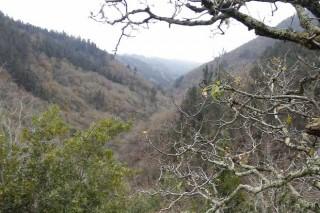 Cinco problemas del monte gallego que destapa la tragedia de Portugal