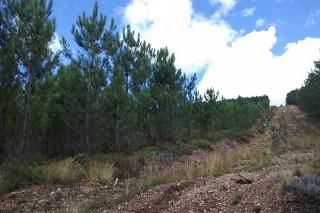 Convocadas las ayudas para prevención de incendios en montes vecinales