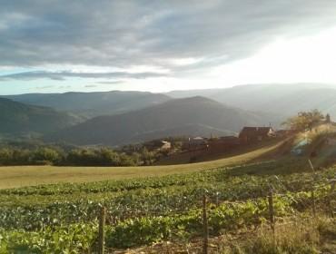 Estos son los 71 ayuntamientos gallegos en los que la Xunta priorizará recuperar para el cultivo más de 5.000 hectáreas
