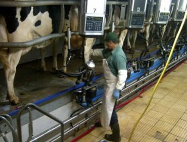 Convocados los premios Exceleite 2020 a las mejores ganaderías de vacuno de leche de Galicia