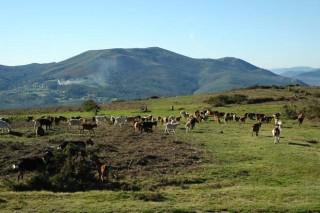 Denuncian la supresión de las ayudas de la PAC para los pastos arbustivos y bajo arbolado de menos de 0,3 hectáreas