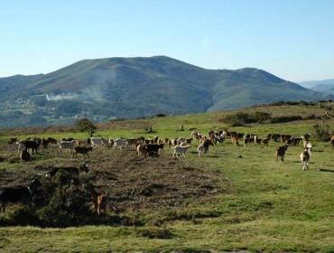 Programa de la reunión de otoño de la Sociedad Gallega de Pastos y Forrajes