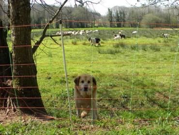 Convocadas las ayudas para la prevención de daños por la fauna salvaje