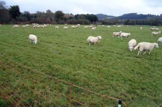Los perros sueltos se convierten en un foco de daños para la ganadería de ovino y caprino