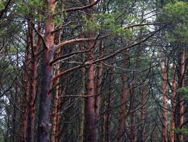 Los cambios en una aplicación informática enredan la presentación de proyectos de ordenación forestal
