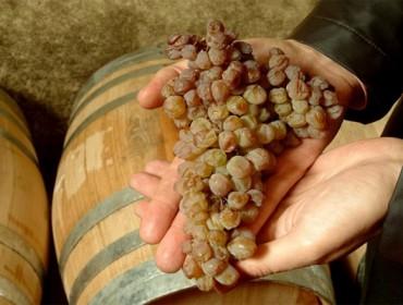 «El vino tostado es un tesoro enológico de Galicia»