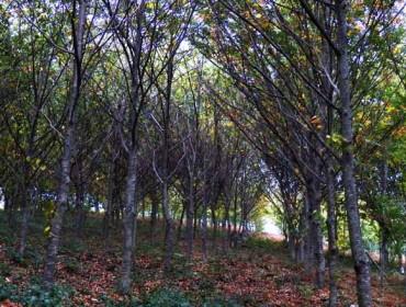 Inscritos 5 montes de Pontevedra en el registro de masas de frondosas autóctonas