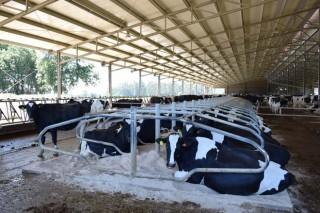 Cinco formas sencillas de mejorar la gestión de una ganadería de vacuno de leche