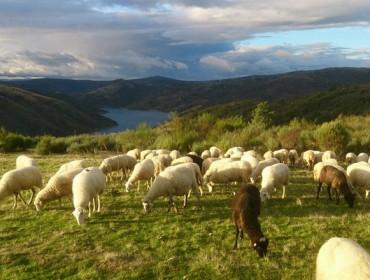 Situación actual de los parásitos hepáticos y ruminales del ganado ovino y caprino gallego