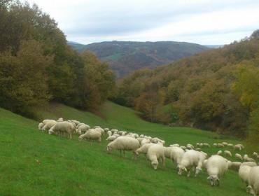 Así quedan finalmente las ayudas del Gobierno a los ganaderos de ovino y caprino
