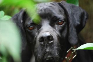 Malestar en el agro por la Lei de Benestar dos Animais Domésticos