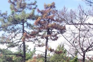 La Xunta crea la Red de avisos fitosanitarios en materia forestal