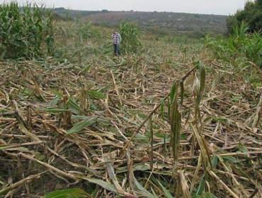 «Si los Tecores desaparecen, el problema del jabalí se va a multiplicar»
