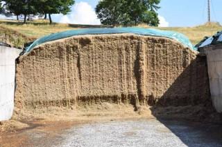 ¿Como incide la digestibilidad de la fibra de los forrajes en la producción de leche?