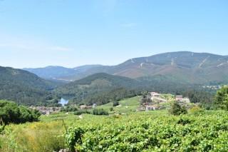 Primer plan estratégico para salvar la DO Ribeiro del abandono de viñedos y pérdida de viticultores