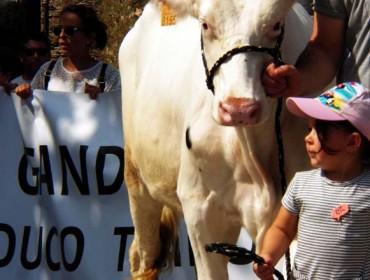 Agromuralla pide menos impuestos de los ayuntamientos para las ganaderías