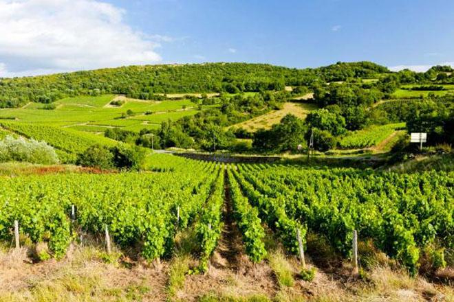 ¿Que vinos extranjeros compran los españoles?