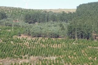 Webinar: Cómo adaptar la gestión de los bosques y la industria forestal al cambio climático