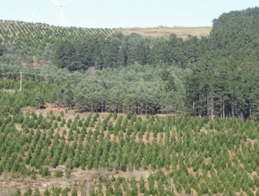 La ordenación y planificación forestal, claves para crear riqueza en el monte gallego
