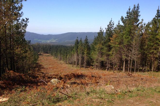 Este es el monte que viene: regulación del eucalipto y promoción de coníferas y castaños