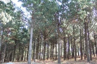Encuentro para abordar las perspectivas de los montes de pino y de su madera