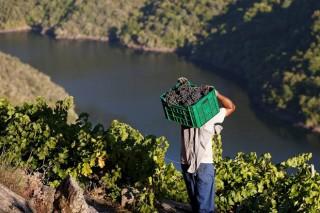 Curso  sobre 'La  Ribeira Sacra: Paisaje, patrimonio y tierra de vinos'