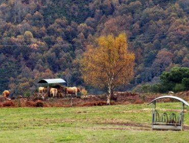 La Xunta propone prorrogar las ayudas agroambientales a costa de reducir apoyos a la montaña