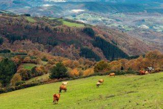La ganadería de vacuno de carne urge apoyos para enfrentar la crisis