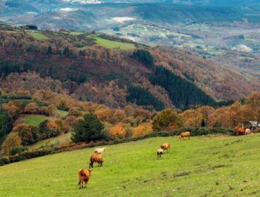 Ternera Gallega encara el reto de mejorar precios y desestacionalizar la producción