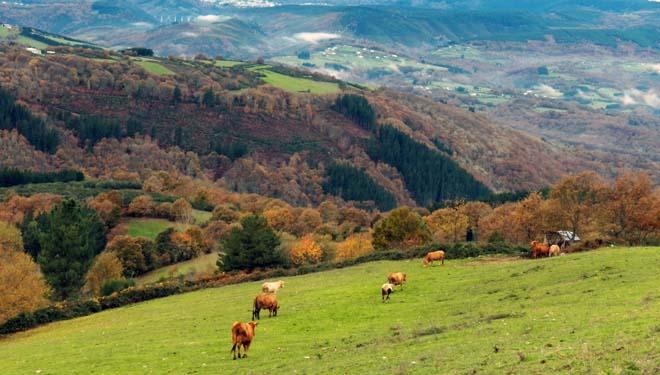 Radiografía de la tierra agraria en Galicia: cómo hemos llegado a tener buena parte del territorio abandonado