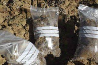 Consejos para seleccionar y recoger correctamente las muestras de suelo