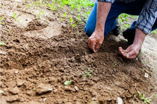 Piden al Ministerio que facilite a los agricultores la comercialización de sus propias semillas ecológicas