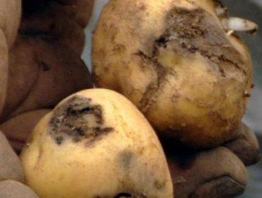 Ayudas para agricultores y viveros afectados por organismos de cuarentena