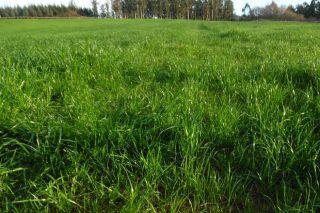 Bisannia primavera: fórmulas de abonado a la carta para las praderas