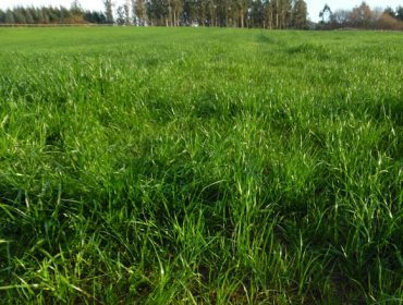 Bisannia Pradera Primavera: abonado eficaz y eficiente para las praderas