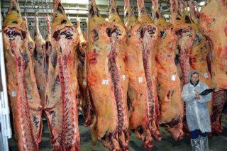 Webinar sobre diagnóstico de calidad de la carne a través de la ecografía