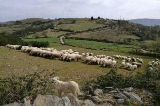 Crece la preocupación en el campo gallego por la falta de lluvias