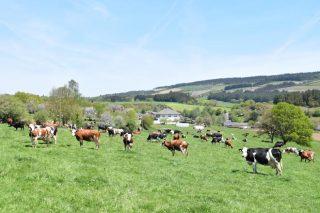 Cambios normativos que se prevén para las ganaderías de leche en ecológico