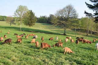 Las ventas de cordero y de cabrito bajo mínimos a las puertas de la temporada alta