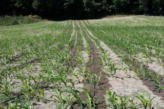 Cursos en Guísamo sobre riego, energías renovables y cultivos de lino y cáñamo