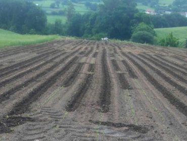 Unións pide acciones de prevención de daños por el jabalí en la campaña del maíz