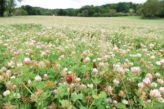 Curso sobre «Las plantas indicadoras del manejo de las praderas»