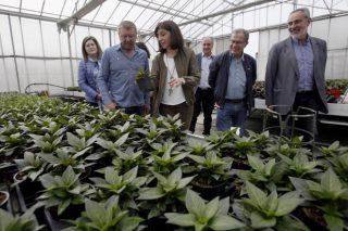 La planta ornamental de Galicia factura cerca de 40 millones al año