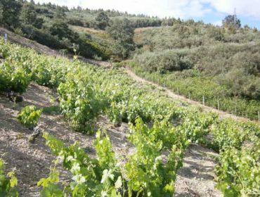 La futura PAC para el sector gallego del vino