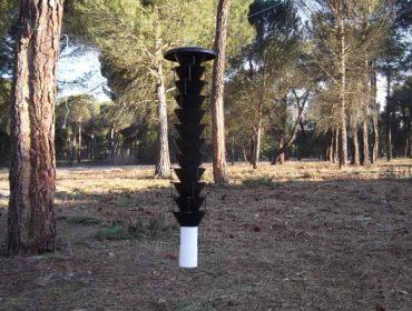 Europa advierte deficiencias en Galicia en el control del nematodo del pino