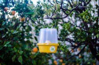 Nueva regulación del uso de feromonas y bioestimulantes como medios de defensa fitosanitaria