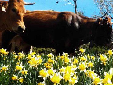 Abierta la inscripción a un curso gratuito de ganadería regenerativa en Os Ancares
