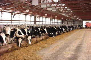 Previsiones de futuro del sector lácteo en Estados Unidos